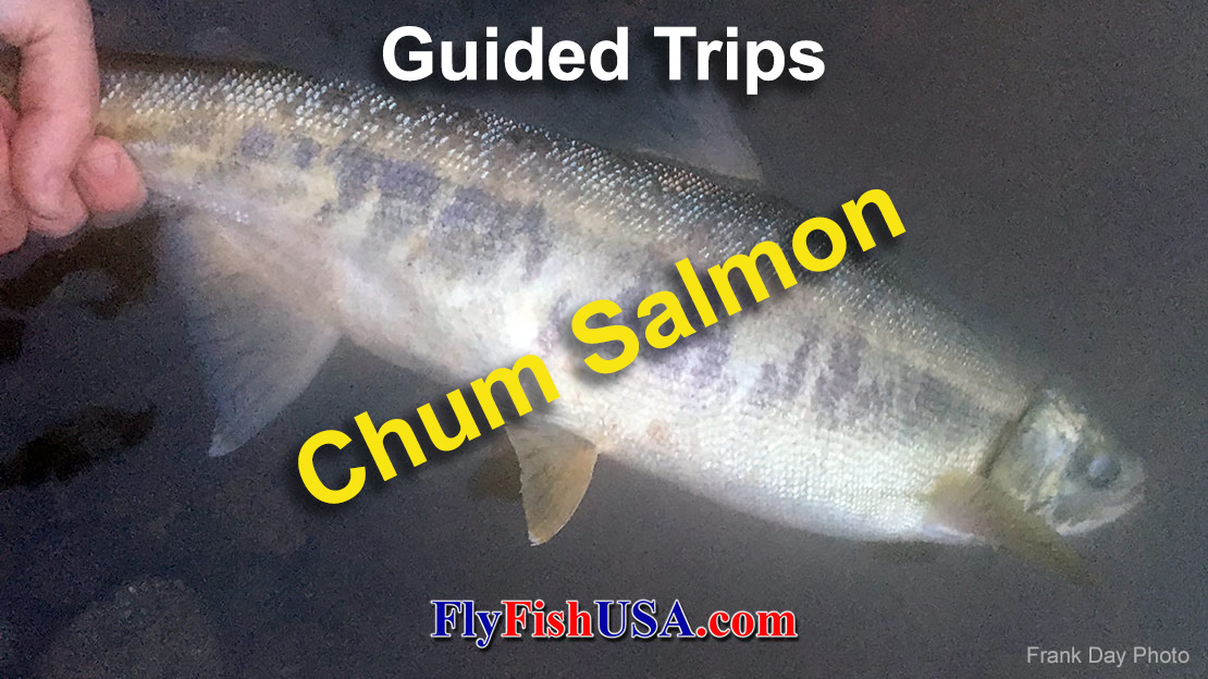 Guided Fly Fishing Trips for: Oregon Chum Salmon