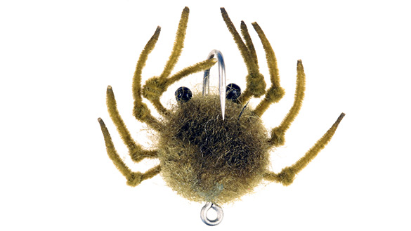 Money Crab Money Crab