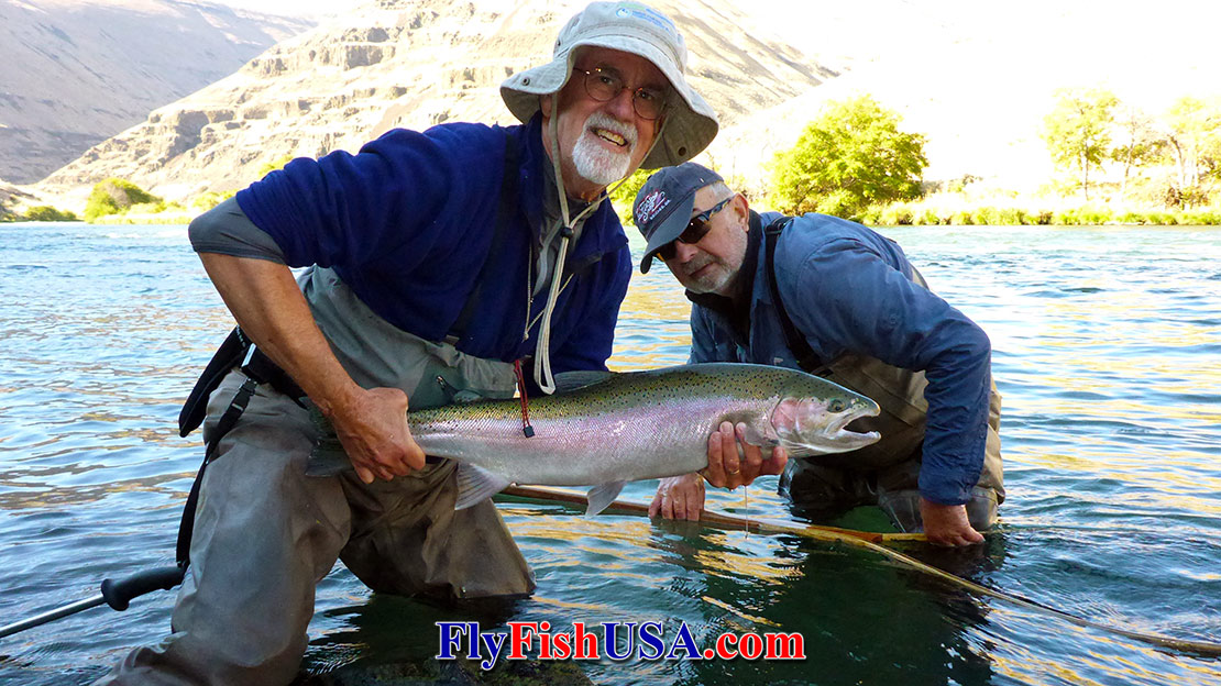 Columbia River Steelhead Runs, 80-years of ladder counts