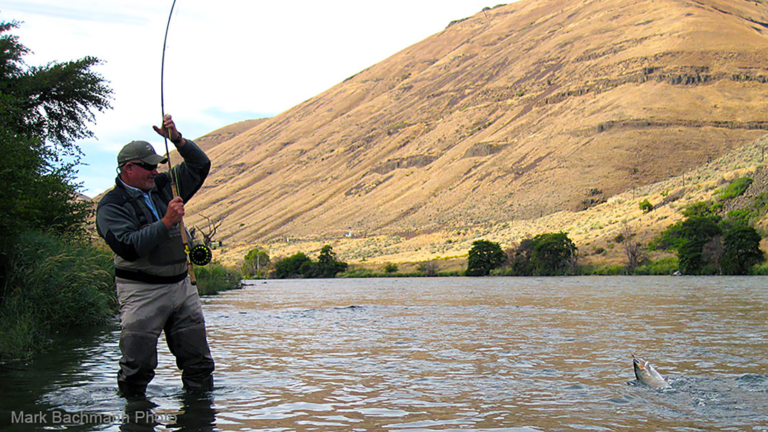 Jack Henderson gets ready to beach a summer steelhead hooked on the Deschutes River with a Fly du Jour.