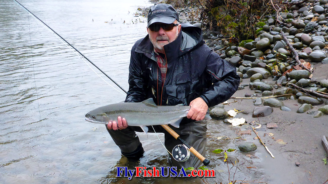 Mark Bachmann caught this steelhead from the Sandy River with a Sage 7140-4 x rod 11/16/17.