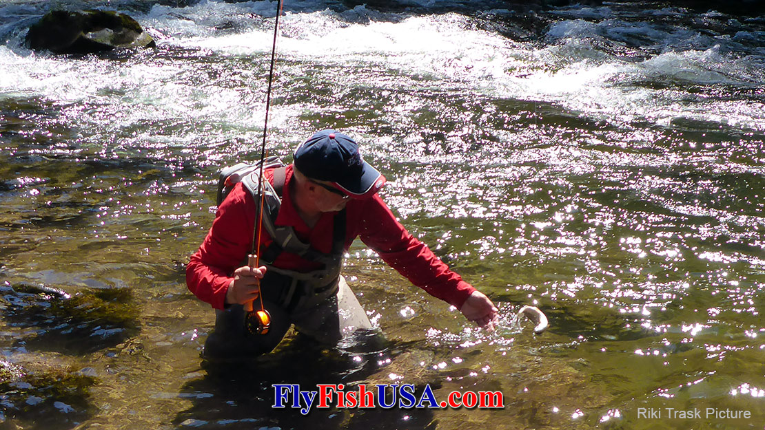 Mark Bachmann Releasing a trout caught, while using a Sage 590-4X fly rod.