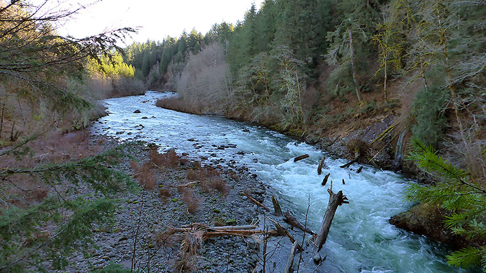 Sandy river and tributaries for Sandy river fishing