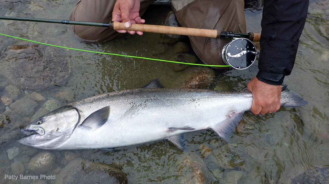A picture of a large ccccccchinook salmon and the Spey setup it was landed with.