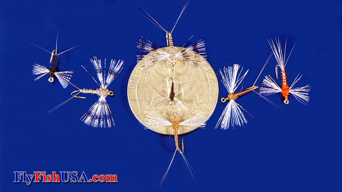 Fishing flies that match mayfly  spinners are displayed with a coin to give reference  size.