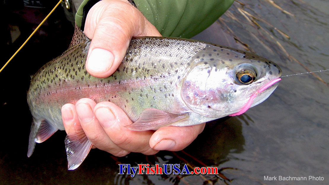 "This is the most proven Winter Steelhead Spey Fishing ""skill-set-builder"" available."