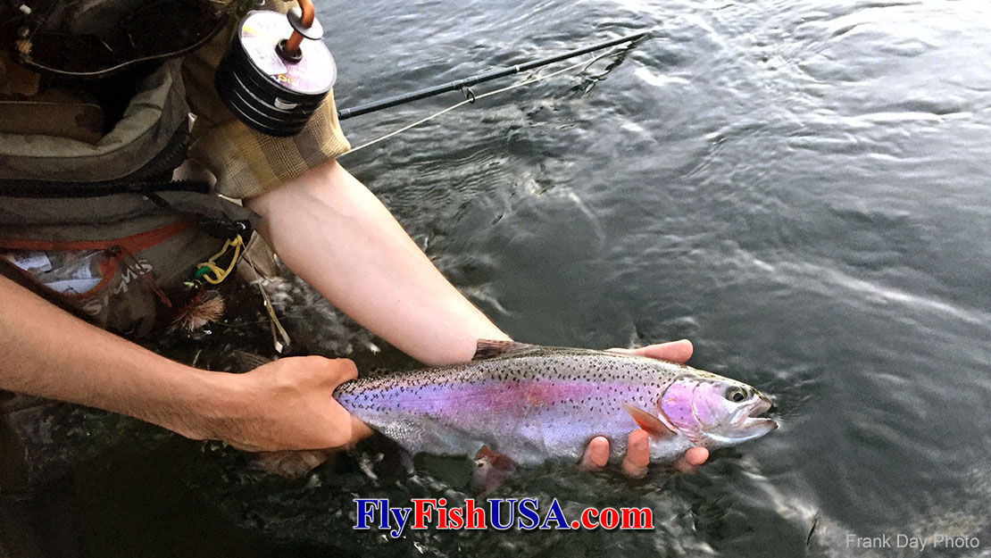 This angler caught a fine Deschutes River Redside trout using the Fishpond Headgate Tippet Holder.