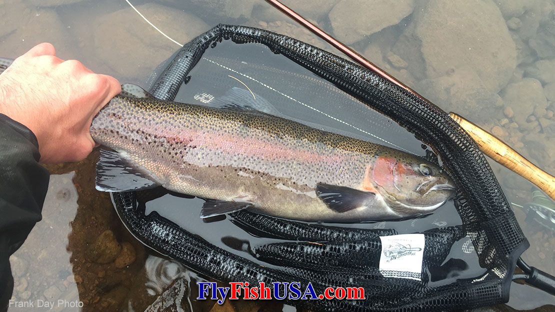 Photo of a rainbow trout caught from Clear Lake near Mt. Hood in Oregon.