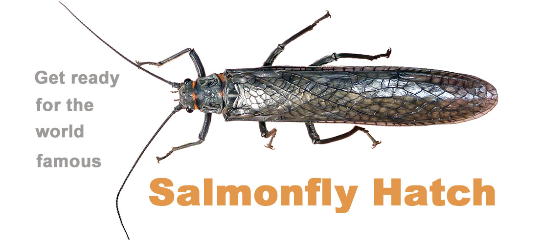 Get Ready for the World Famous Salmon Fly Hatch