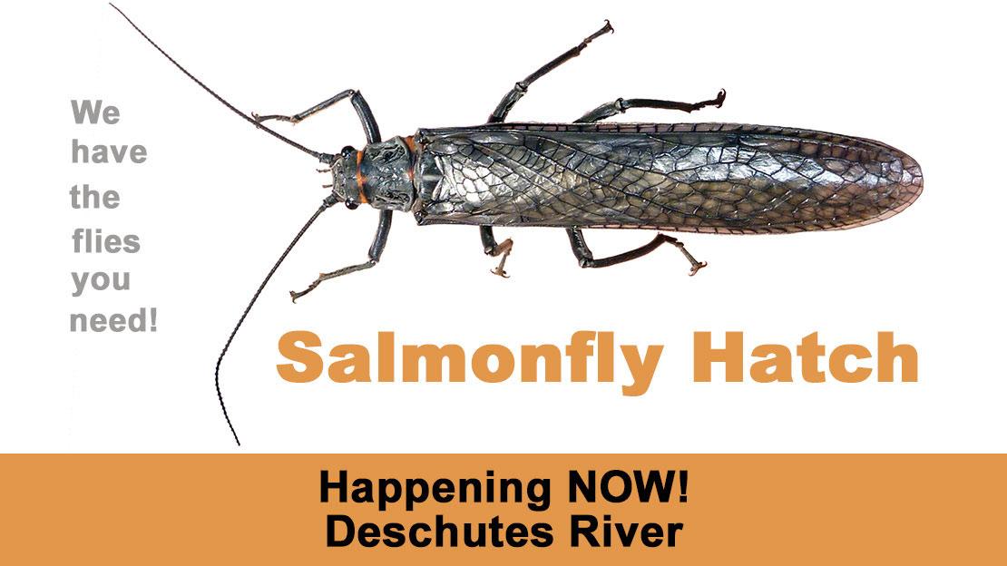 Deschutes River Stonefly Hatch