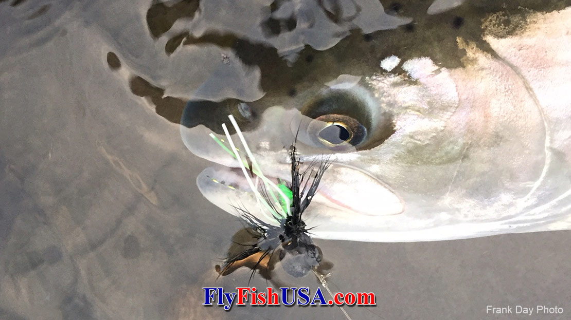 Waking Fly Basics for Steelhead