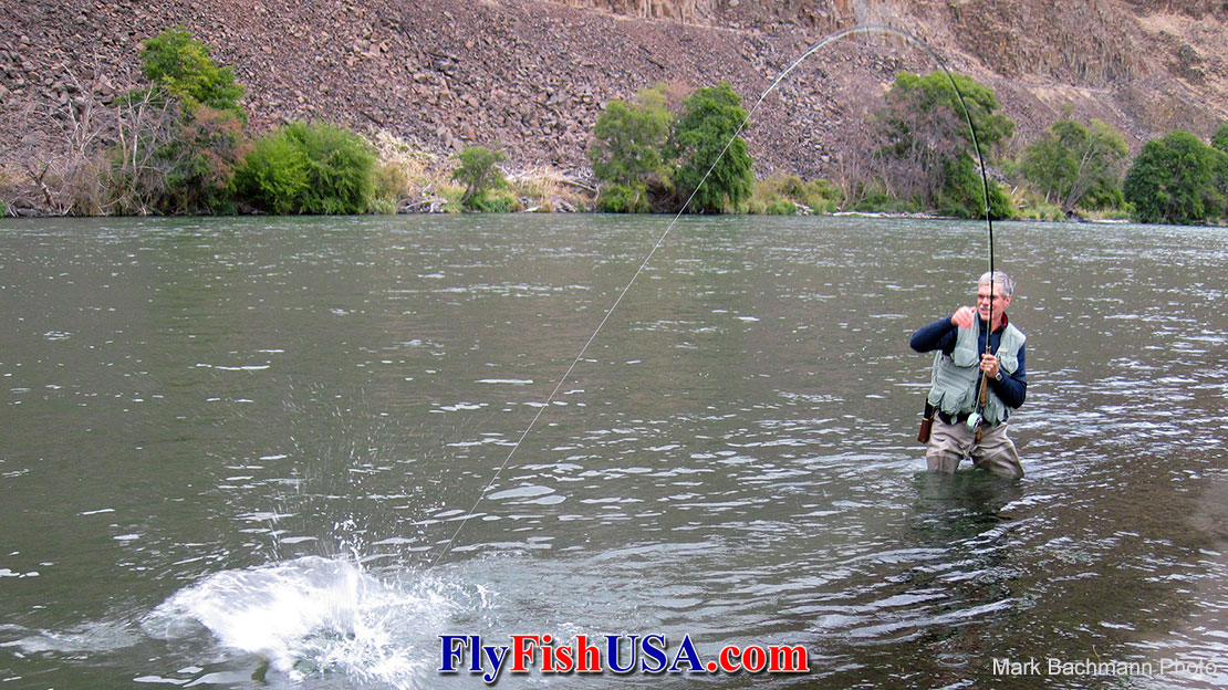 Deschutes River steelhead can be explosive!' data-image=