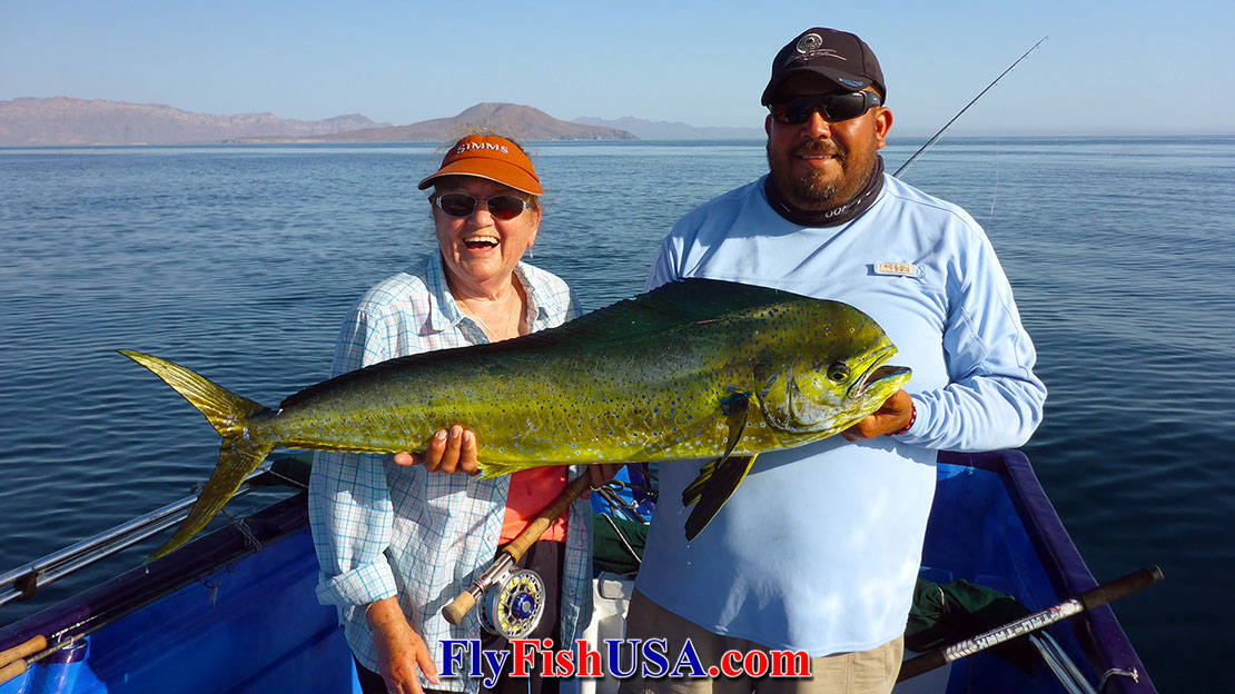 Loreto, BCS, MX Fishing Report Dorado