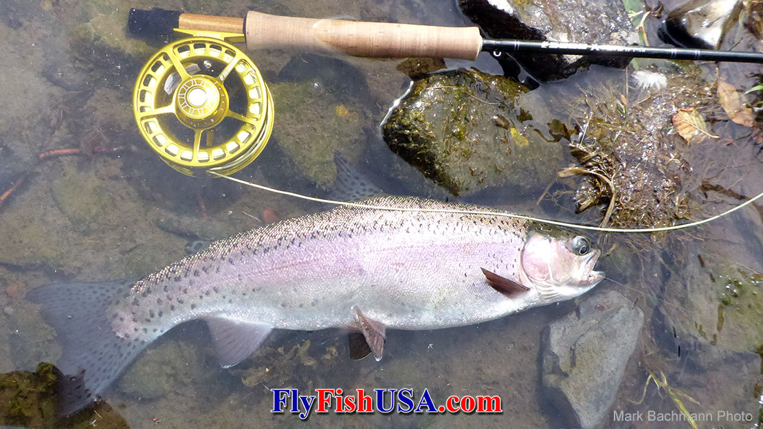 Back Eddies Provide Easy Living For Trout