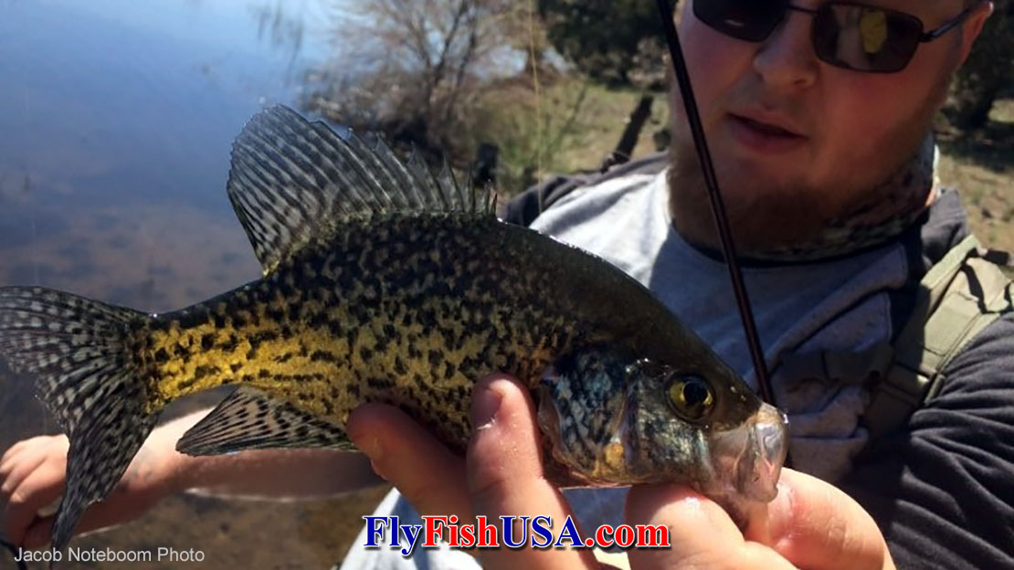 Crappies on the Fly