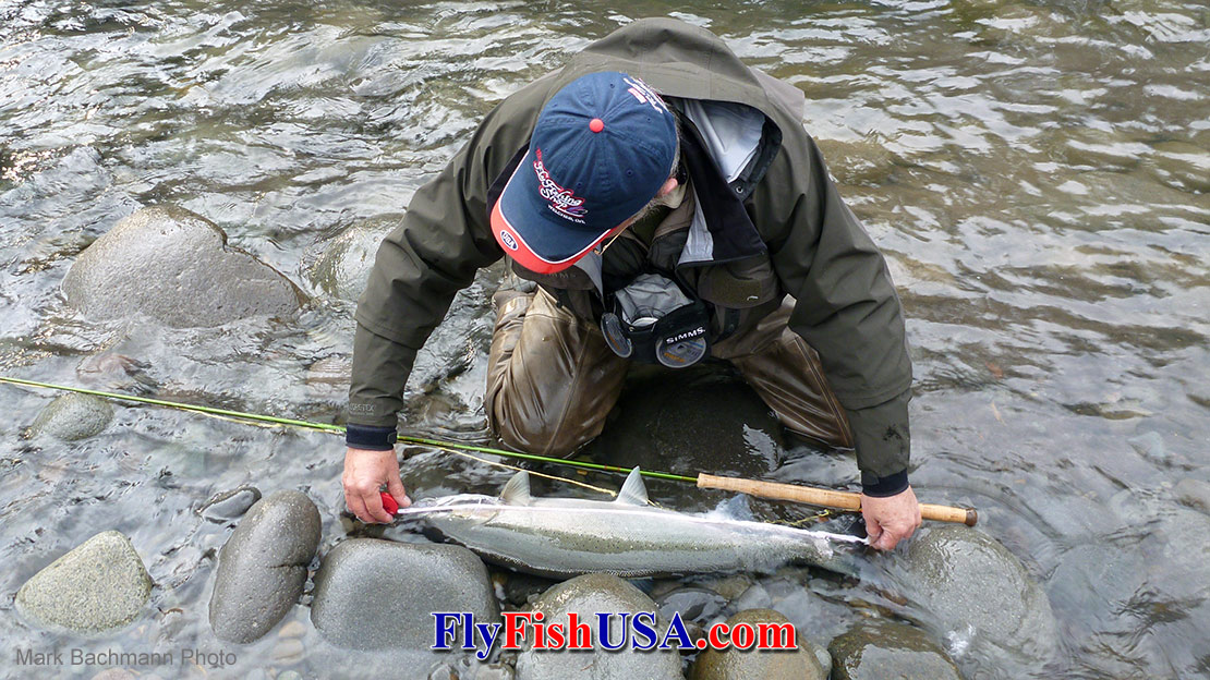 Mark Bachmann landed this bright Sandy River wither steelhead with a Sage 5119-4 TCX five weight Spey rod.
