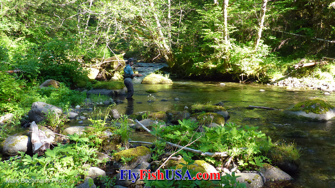 Favorite Fly Rods for Mountain Streams