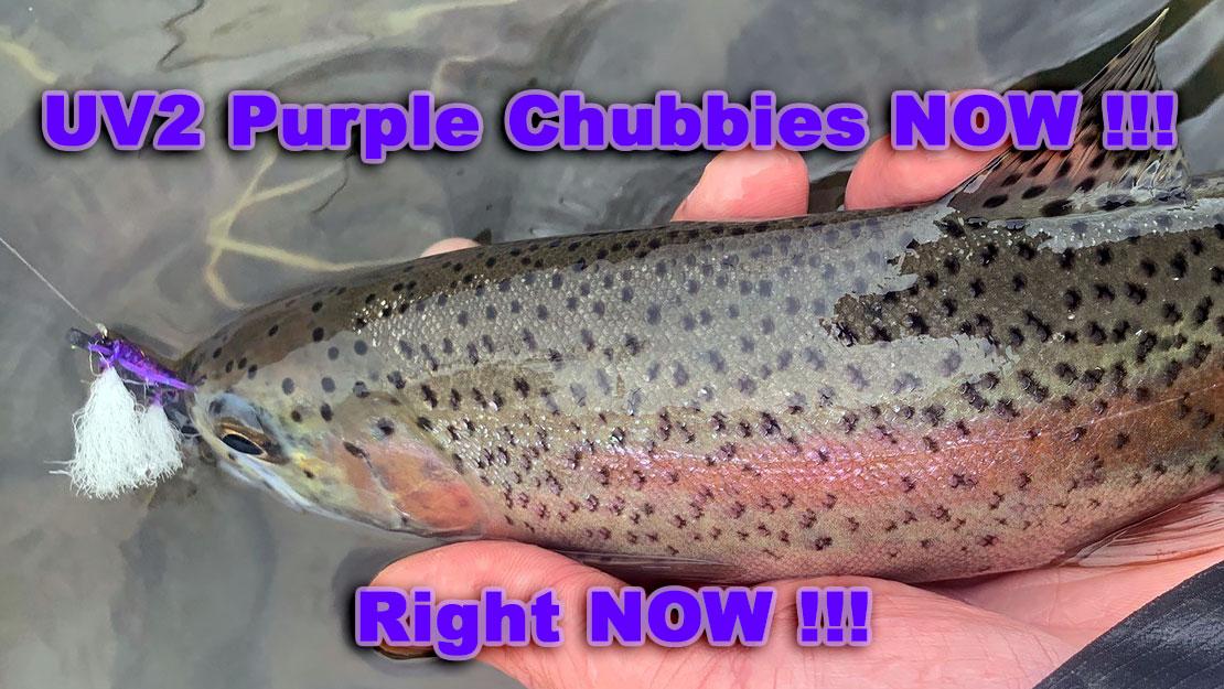 Chubby Chernobyl, UV2 Purple