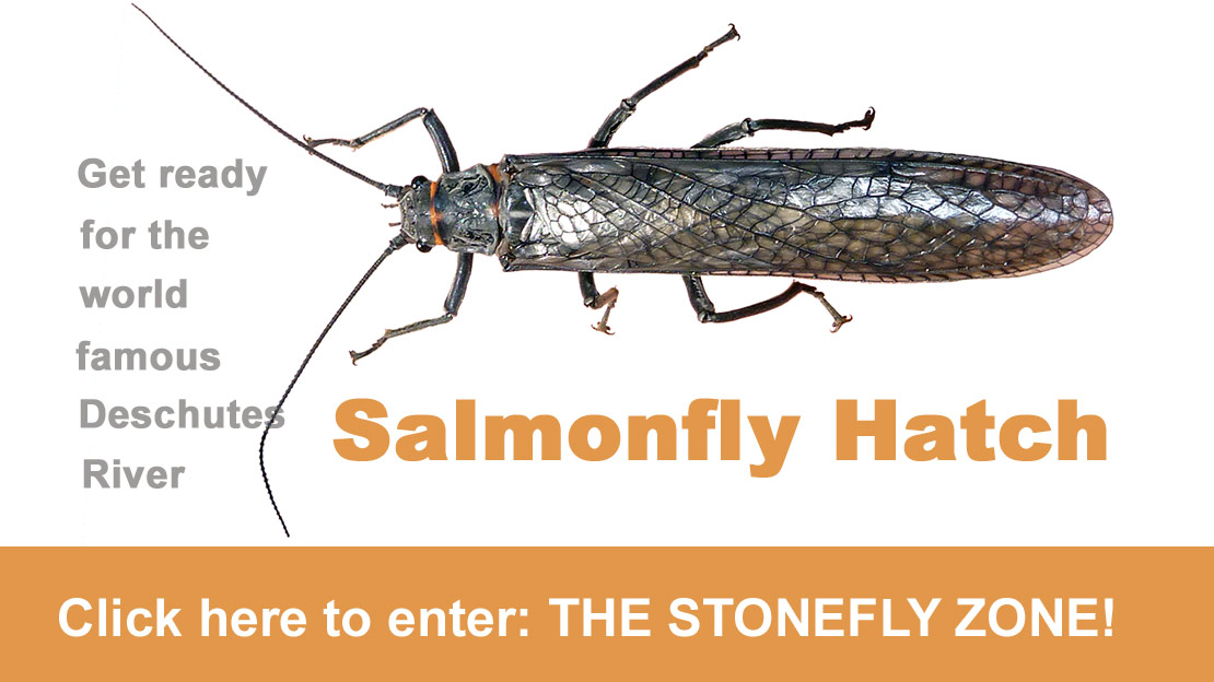Salmon and Stone flies