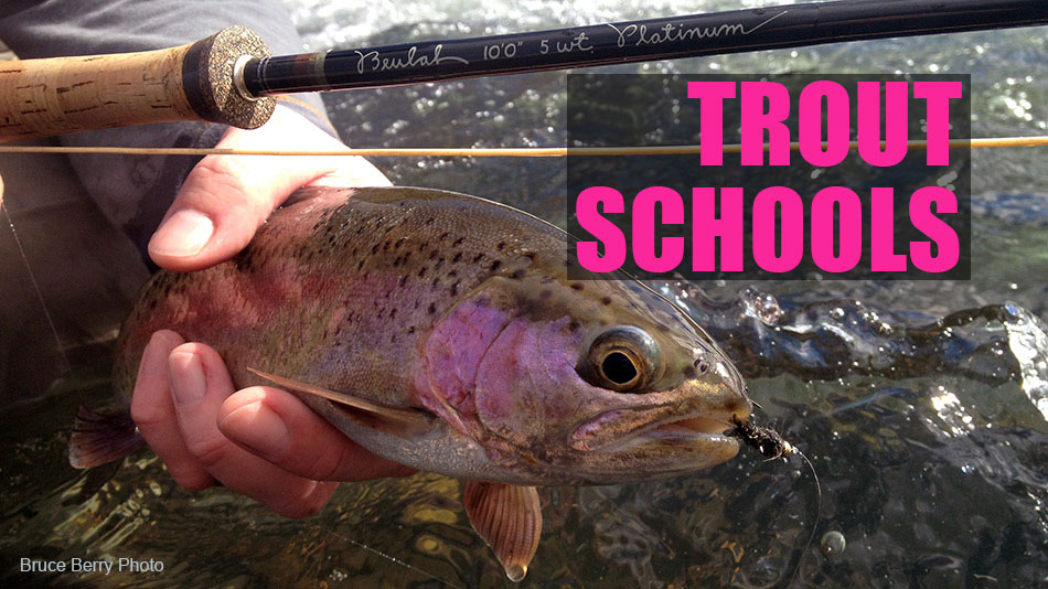 Fly Fishing trout schools