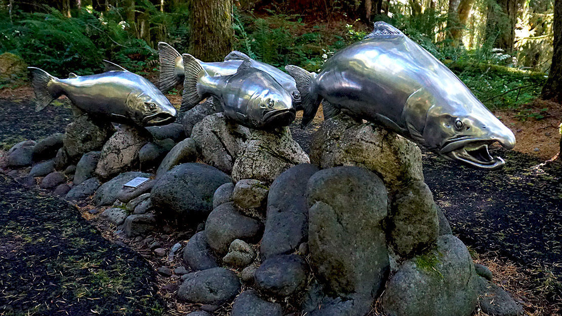 A school of stainless steel Chinook salmon swim across a sidewalk in Cascade Streamwatdh.