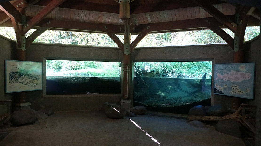 The underwater viewing chamber in Cascade Streamwatch in Oregon.